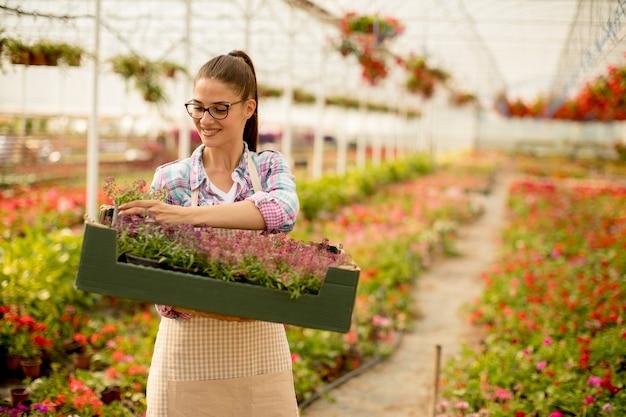 温室に春の花がいっぱいの箱を持っている若い女性