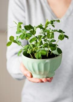 달콤한 완두콩 묘목과 녹색 그릇을 들고 젊은 여자