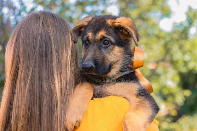 Young woman holding her german shepherd puppy on shoulder