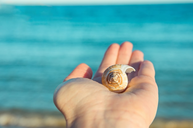 Young woman holds in hand beautiful spiral sea shell.
