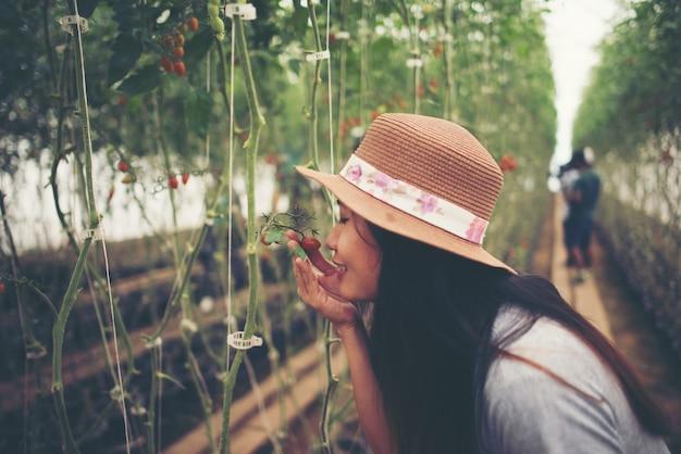 収穫する有機トマトと温室の若い女性。