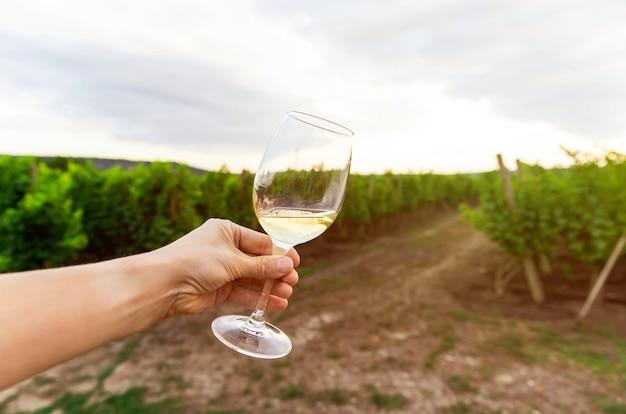 젊은 여성이 포도원에서 와인 시음 경험을 즐기고 있습니다.