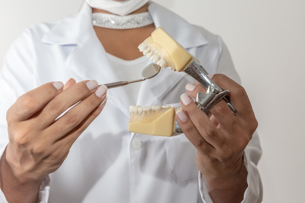 Young woman medical student, orthodontics, holding a dental prosthesis for study and demonstration