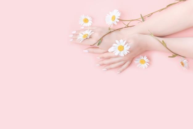 若い女性は化粧用クリームで手を保湿します。カモミールの花。美容コンセプト