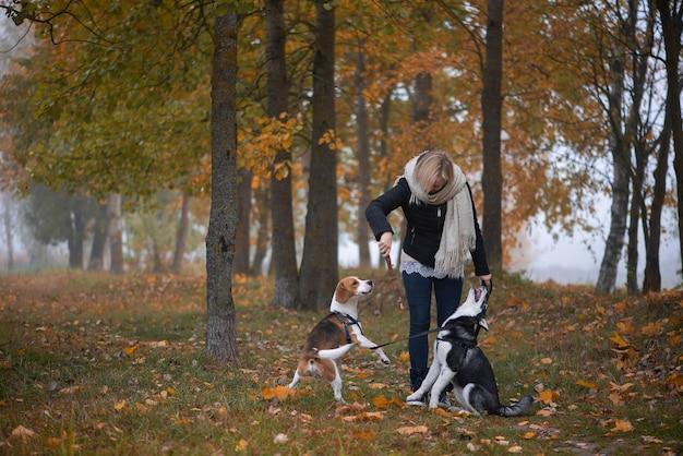 Молодая женщина-владелец домашнего животного с двумя собаками, играющими в осенних листьях