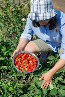 若い女性は庭のベッドから新鮮な熟したイチゴを選びます