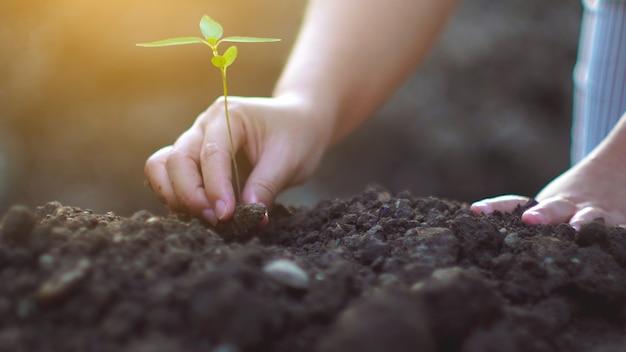 Молодая женщина сажает дерево в саду. концепция экологии