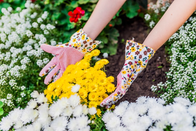 Young woman planting flowers in her garden. young woman gardener care of flowers in the garden. girl pulling out the weeds in flowerbed. people, gardening, care of flowers, hobby concept Premium Photo
