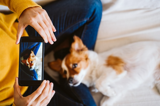 Молодая женщина фотографируя милая малая собака джека рассела дома. оставайся дома концепция