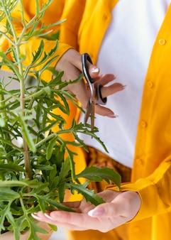 녹색 식물을 돌보는 젊은 여자