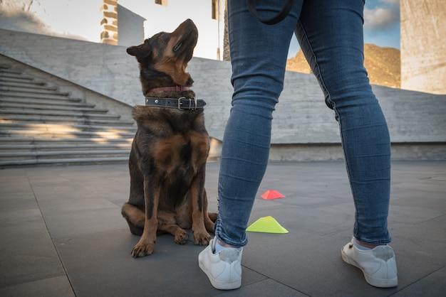 Молодая женщина тренирует свою собаку на открытом воздухе с играми и наградами, сосредотачиваясь на собаке