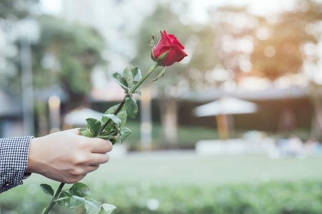 젊은 여자 두 손을 잡고 빨간 장미 꽃 자연 아름 다운 꽃 휴가 복사 공간 빈 발렌타인 데이, 결혼식 또는 낭만적 인 사랑 개념에 메시지를 작성합니다.