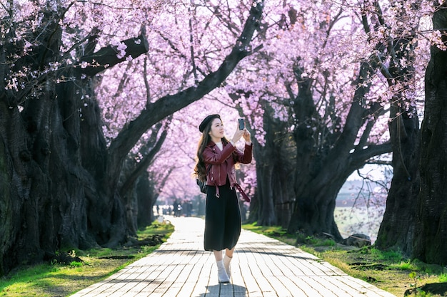 Young woman walking in cherry blossom garden on a spring day. row cherry blossom trees in kyoto, japan