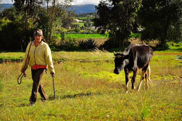 A young woman walking in a field with a single black cow.