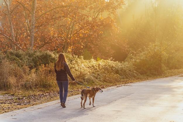 Молодая женщина гуляет с собакой на природе с лучами утреннего солнца, теплым сиянием и длинными тенями