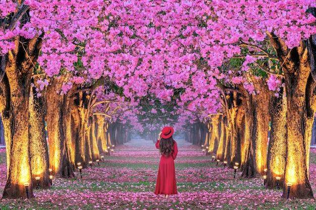 美しいピンクの花の木の列を歩いている若い女性。