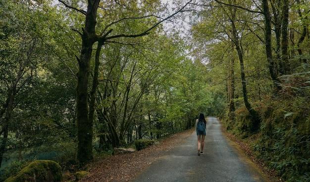 여름에 숲으로 둘러싸인 길을 걷는 젊은 여성. 여름에는 갈리시아. 산티아고의 길