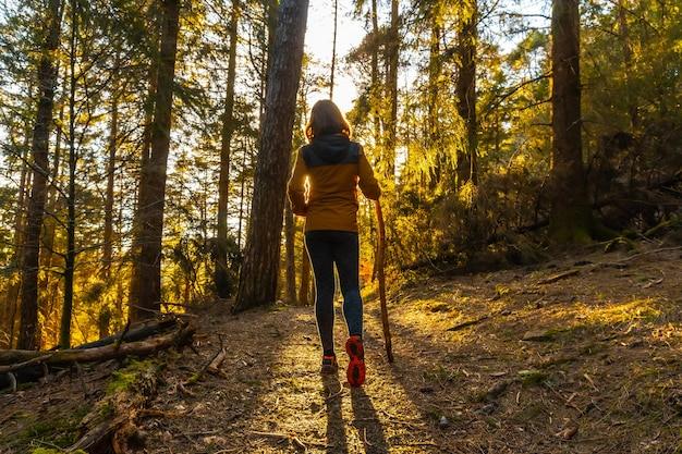 A young woman walking through the beautiful forest at sunset with the sun facing her. artikutza forest in oiartzun, gipuzkoa. basque country