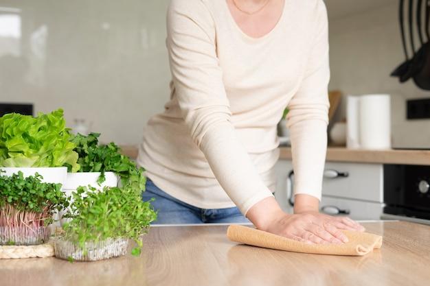 若い女性は台所のぼろきれでテーブルを拭きます。テーブルの上の鍋にレタス、コリアンダー、マイクログリーンが入ったホームハーブガーデン。