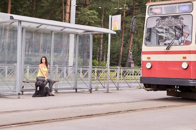 검은 briard를 가진 젊은 여자는 그들 근처에서 트램을 타고 도시 거리의 대중 교통 역에 앉아 있습니다.