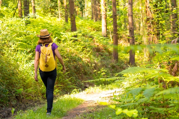 A young woman with a hat walking with a yellow backpack through the forest pines
