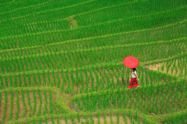 Young woman with red umbrella relaxing in green rice terraces
