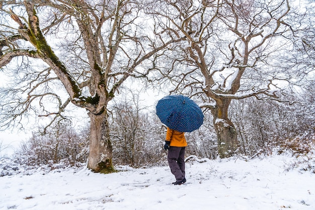 A young woman with a yellow jacket and an umbrella under a beautiful giant tree frozen by the winter cold. snow in the town of opakua near vitoria
