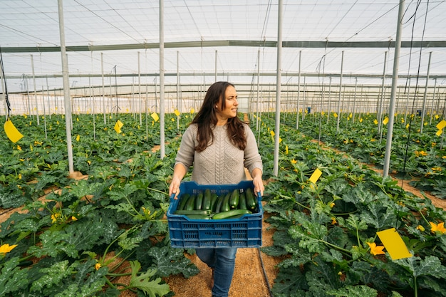 Young woman worker in greenhouse holding box of zucchini organic in greenhouse.