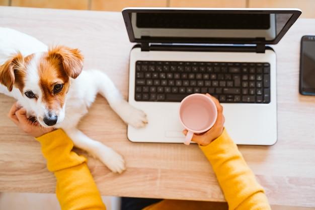 自宅でラップトップに取り組んで、防護マスク、かわいい小型犬を着ている若い女性。在宅勤務