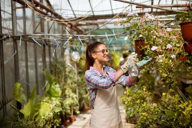 温室で春の花を扱う若い女性