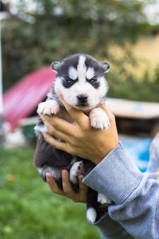 젊은 여성은 그녀의 팔에 허스키의 가장 친한 친구 작은 애완 동물 강아지를 안고 있습니다. 개에 대한 사랑