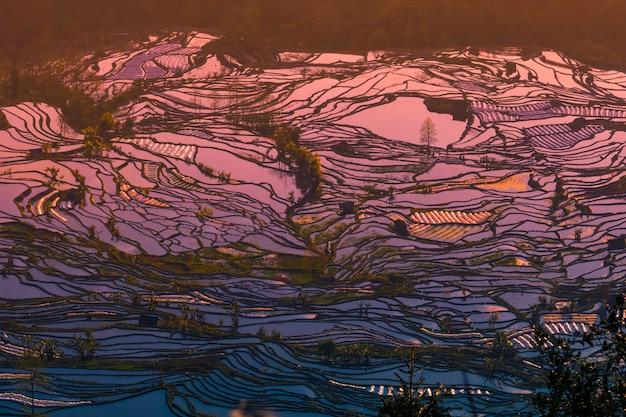 Хани террасные рисовые поля yuanyang, китай во время золотого часа.