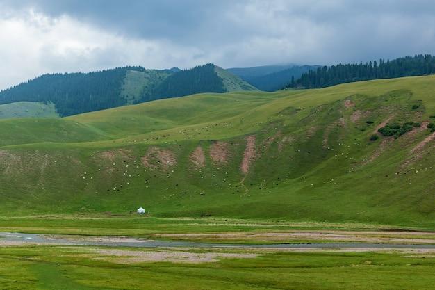 Yurt 또는 유목민의 집은 카자흐스탄의 야생 자연인 풀을 뜯는 양과 양이 점재하는 완만한 푸른 언덕 근처에 있습니다.