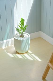 ザミオクルカスは、家の中に植えることができる観賞用の木です。日光と水が少なくてすむから