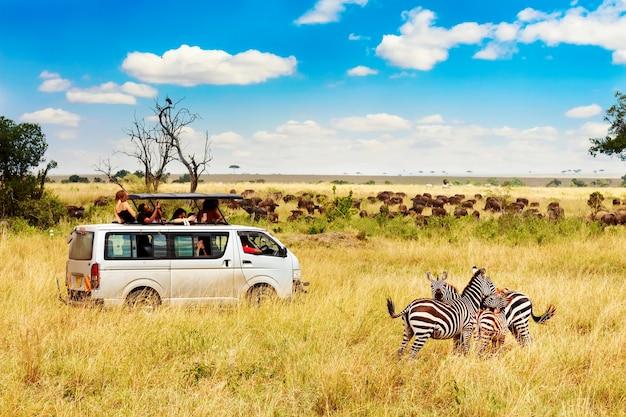 Пара зебры с автомобилем сафари в африканской саванне