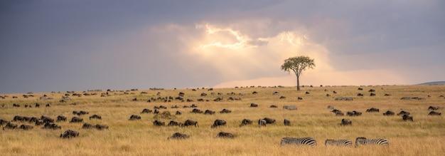 아프리카 초원, 케냐 국립 공원에 얼룩말