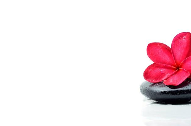 フランジパニの花と禅の石