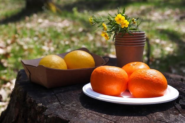 ゼロウェイストコンセプト環境にやさしい使い捨ての有機器具と果物を自然に屋外ピクニック