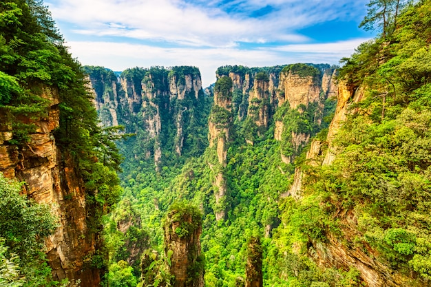 Zhangjiajie national forest park. gigantic quartz pillar mountains rising from the canyon during summer sunny day. hunan, china.