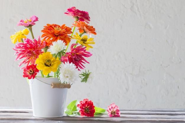 Цинния цветы в ведре на белом фоне