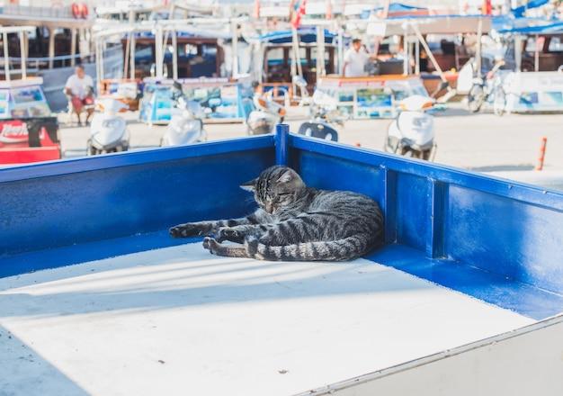 トルコのアンタルヤ、カスの地中海の町の露店でリラックスした怠zyな猫。