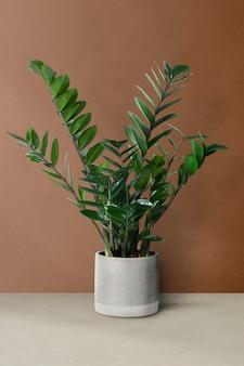 회색 냄비에 zz 식물