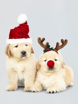 サンタの帽子とトナカイのヘッドバンドを身に着けている2つのゴールデンレトリーバーの子犬