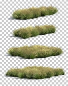 メキシコの羽毛草の3 dレンダリング