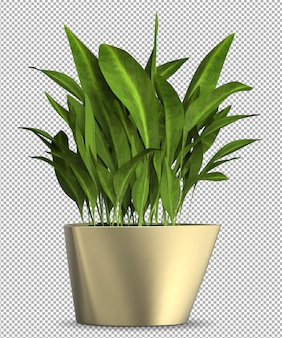 3d plant render of isolated plant in pot