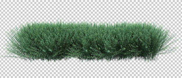 3d render brush bushes isolated