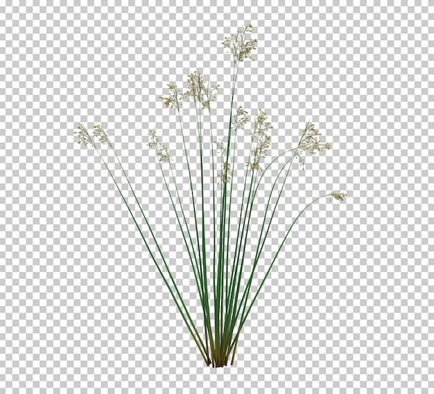 3d render brush tree isolated