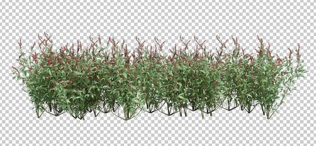 分離された3 dレンダリングブラシツリー