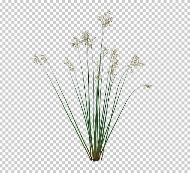 3d render brush tree изолированные