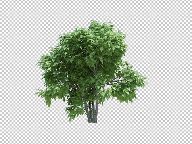 3d render brush trees isolated